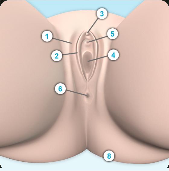 Klitoris durchbohrtes Video bekommen